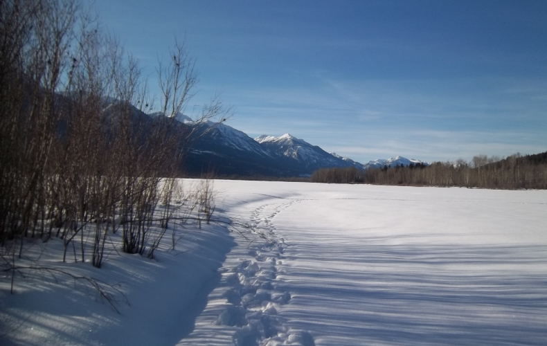 Snowshoe Tracks on the Columbia River